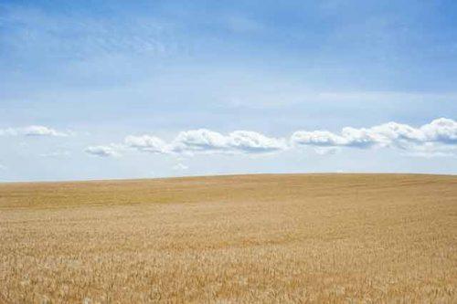 Rideterminazione del valore dei terreni agricoli - Anno 2021